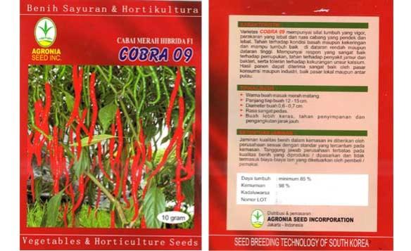 jual benih cabai kriting hibrida - 0857.463.196.10